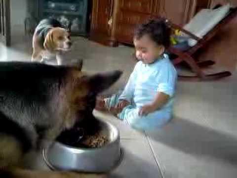 おもしろ!犬と赤ちゃんのエサの奪い合いww