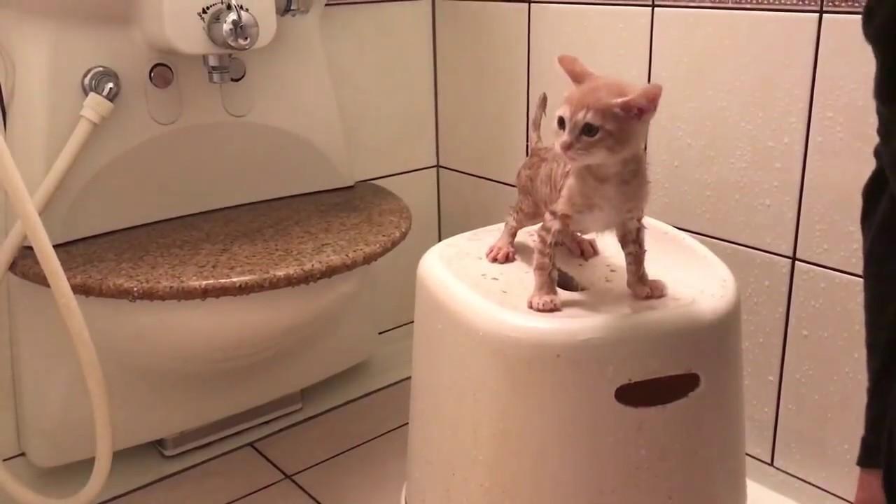 かわいい子猫のバスタイム動画♪