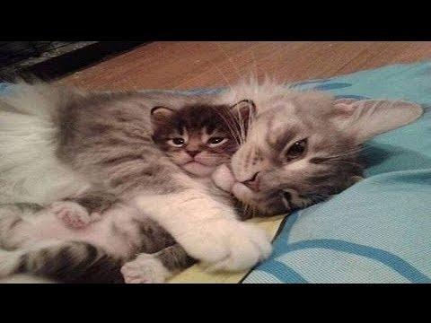 子猫と母猫の仲良し親子特集!もう可愛すぎです♪