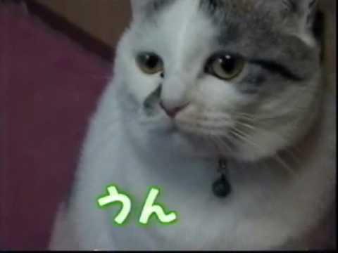 かわいい声でおねだりしちゃう猫ちゃん