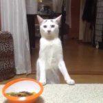 食べたいはずなのに?二足歩行で後ずさる猫ちゃん