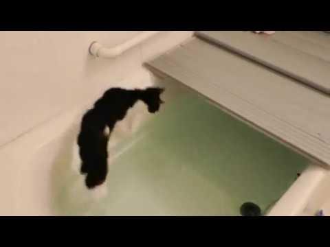 お風呂に二度も落ちるなんて!ツイてない猫ちゃん