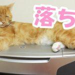なんでそんなところに( ゚ー゚)プリンターから滑ってゆく猫