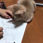 動くものって気になるよね(- -ノ)ノ?どうしてもペンとじゃれちゃう猫ちゃん