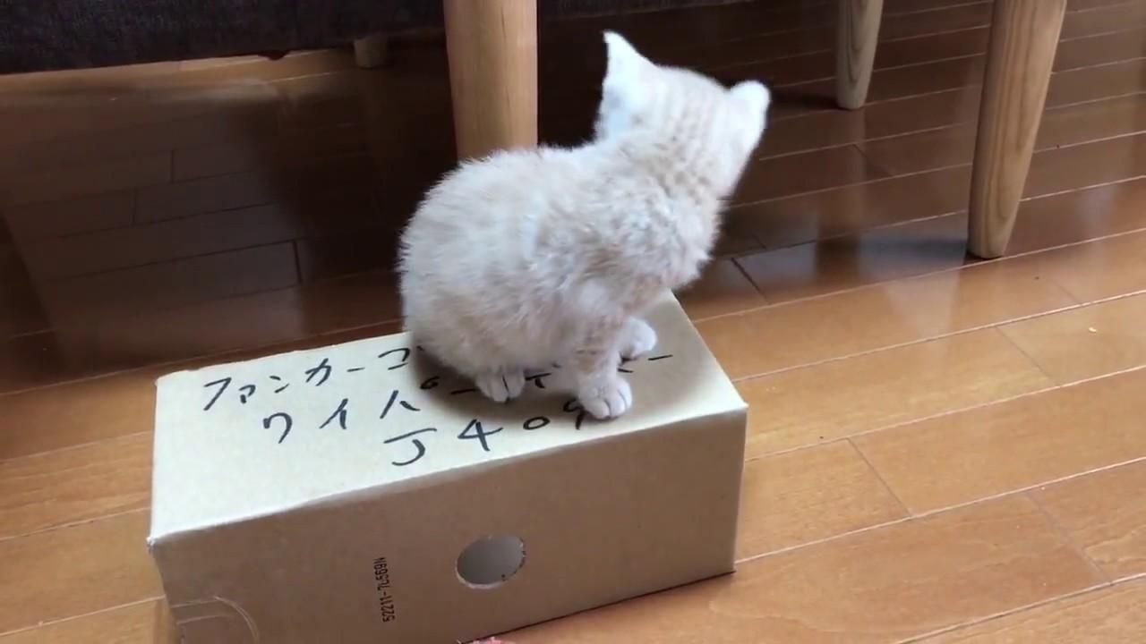 箱の上から一回転?子猫に起きたハプニング(;・∀・)