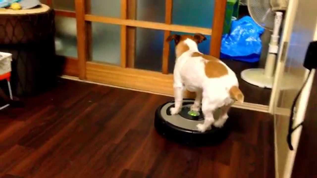 ルンバは犬だって乗りこなせるんだワンっ!