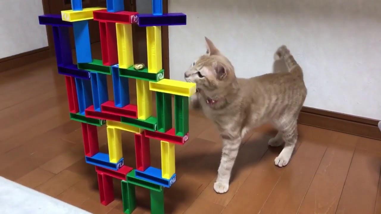 これはビックリ!器用すぎる猫ちゃんの遊び♡