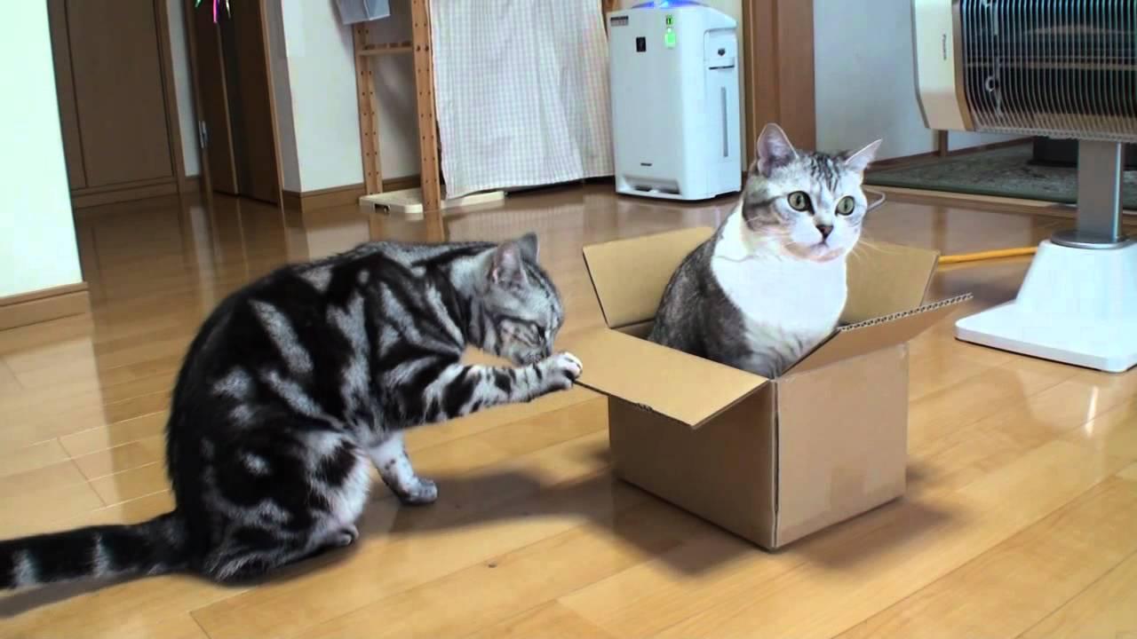 入る猫あれば壊す猫あり´ω`)ノ性格の出るダンボール!