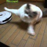 怖いけど気になる・・・!ルンバVS猫ちゃんの対決♡