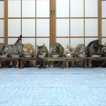 仲良くご飯中だったのに(˚ ˃̣̣̥ω˂̣̣̥ )驚き逃げ出す猫ちゃんたち