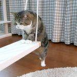 ゆら~り♡猫ちゃんがブランコに挑戦!