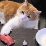 よ、毎度あり!猫ちゃん寿司がすごすぎる!!