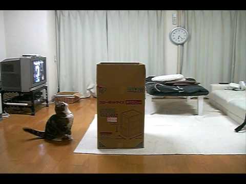 なんとしても箱に入りたい猫ちゃんのチャレンジ!♡