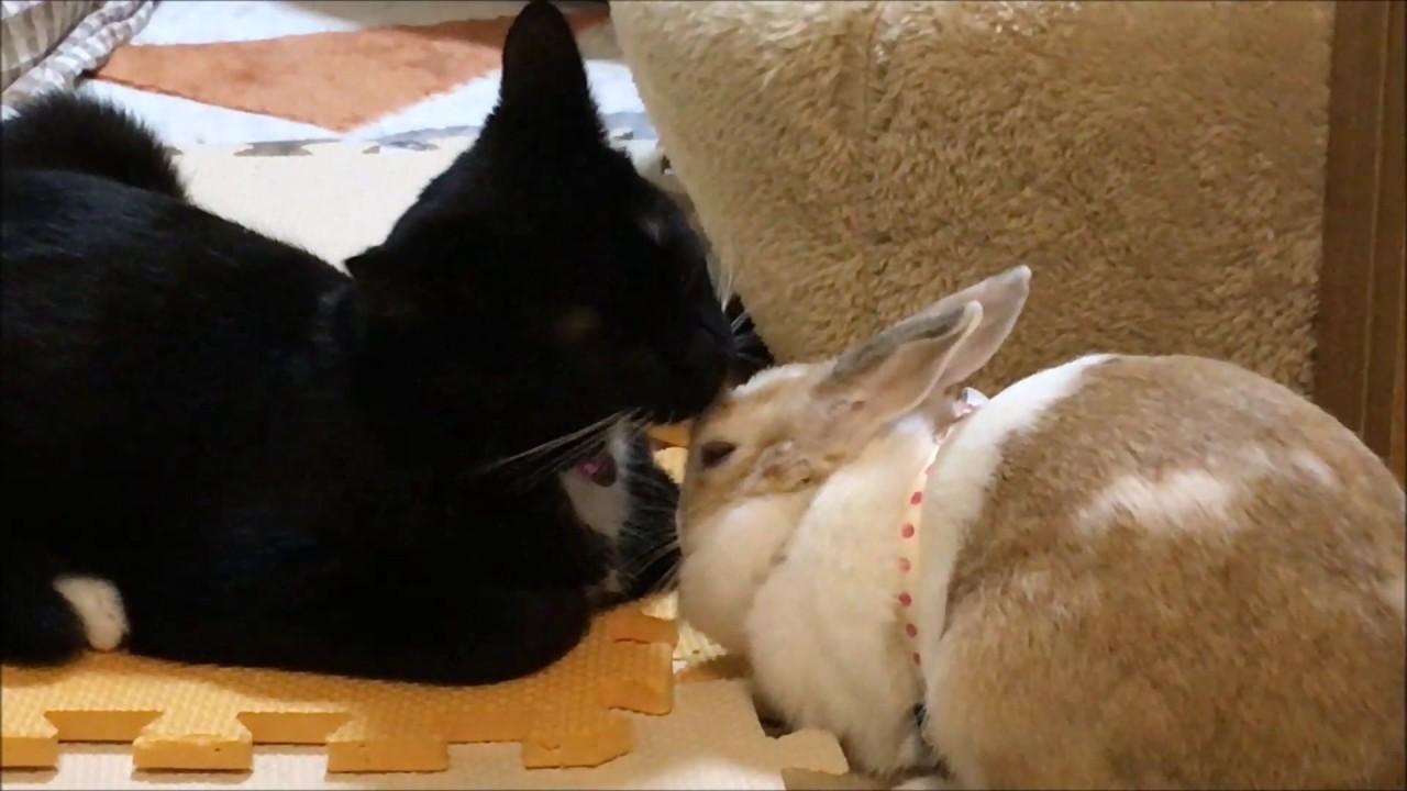 これは珍しい♡仲良しウサちゃんネコちゃん!