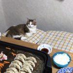 叱られた猫のマンチ立ちが可愛すぎる♡