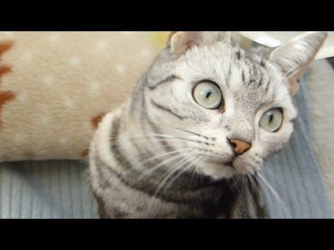 「お家の平和は任せてニャ♡」ハチ退治の猫ちゃん
