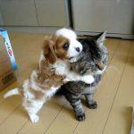 大人な対応を見せる猫さんに構うことなく甘える子犬ちゃん(*⁰▿⁰*)