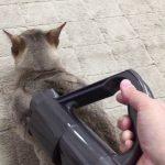 「気持ちいいんだニャ〜♪」掃除機に吸われる猫