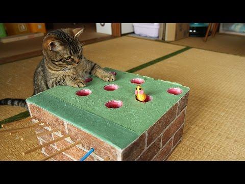強烈猫パ−ンチ!もぐらたたきに夢中な猫ちゃんズ♡