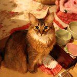 もう食べたのに・・・とぼけてご飯をおねだりする猫ちゃん♡