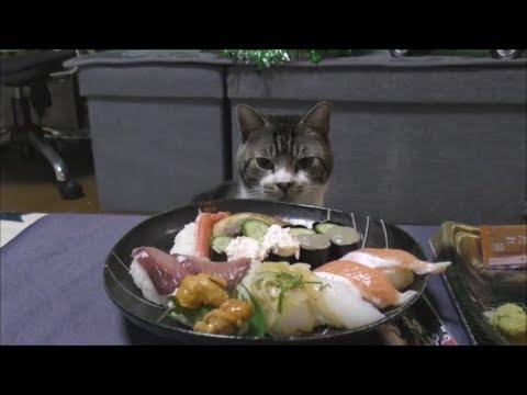 「僕の分は〜?」猫ちゃんとクリスマスディナー♡