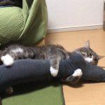 抱きまくらならぬ足まくらに夢中♡な猫ちゃん!