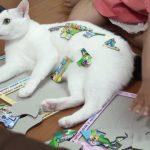 パズルを邪魔しに来たはずなのに・・・おもちゃにされる猫♡