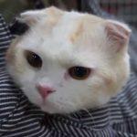 顔を出したり入ったり、バッグin猫に萌え〜♡