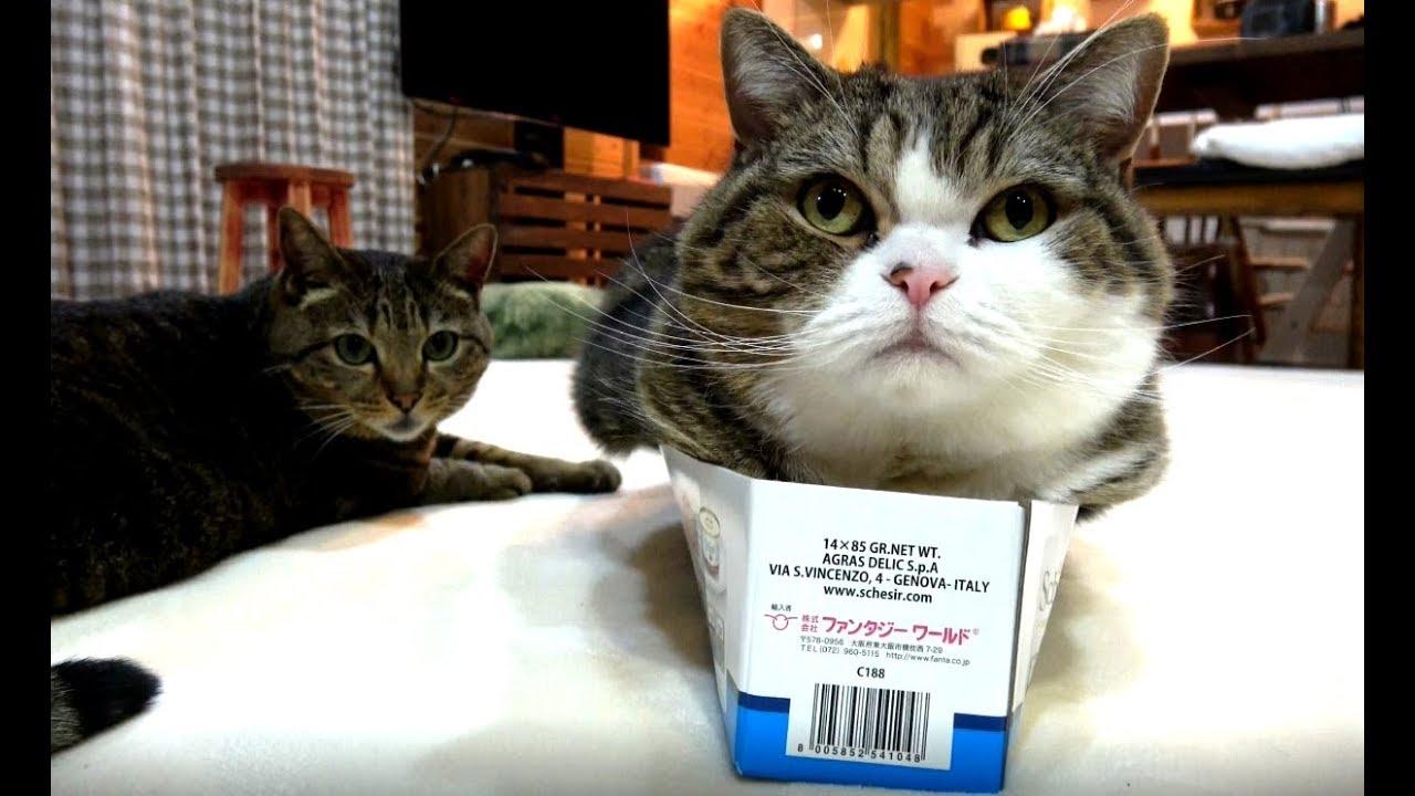 入らないでしょ!?細長すぎる箱vs猫♡