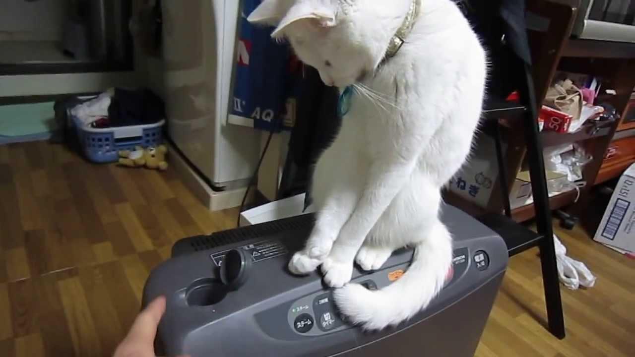 開けたい飼い主VS閉めたい猫ちゃんの可愛すぎる対決♡