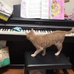 猫ちゃんの肉球で奏でるピアノのメロディにメロメロ〜♡