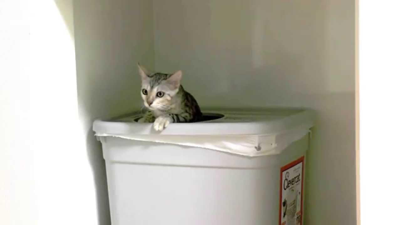 雷にビックリな猫ちゃんが飛び込んだのは・・・?