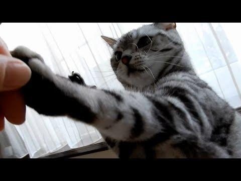 両手でスプーンを握る猫ちゃんの仕草が可愛すぎてキュン死確定〜!!