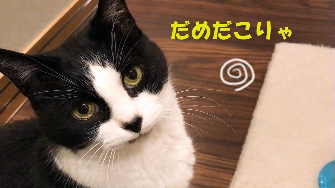 どうにも匂いが苦手だにゃん・・・猫ちゃんに納豆をあげてみたら?
