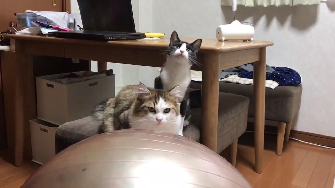 おもちゃよりカメラが気になりすぎる猫(>艸<○)
