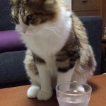 刺激お強め?♡炭酸水にビックリ!な猫ちゃん