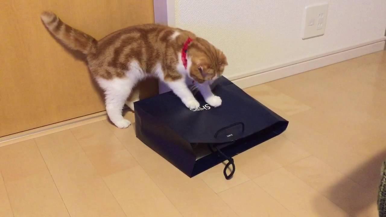 紙袋に隠れていたのは・・・?猫ちゃんのドッキリ成功♡