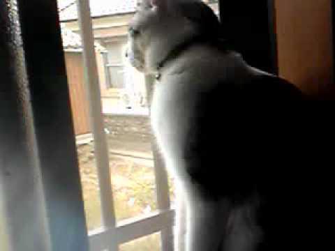 窓の外を眺めている猫ちゃん♡飼い主さんが邪魔をしようとすると・・・?
