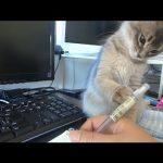 ペンがどうしても気になる・・・!お仕事を邪魔する猫ちゃん♡