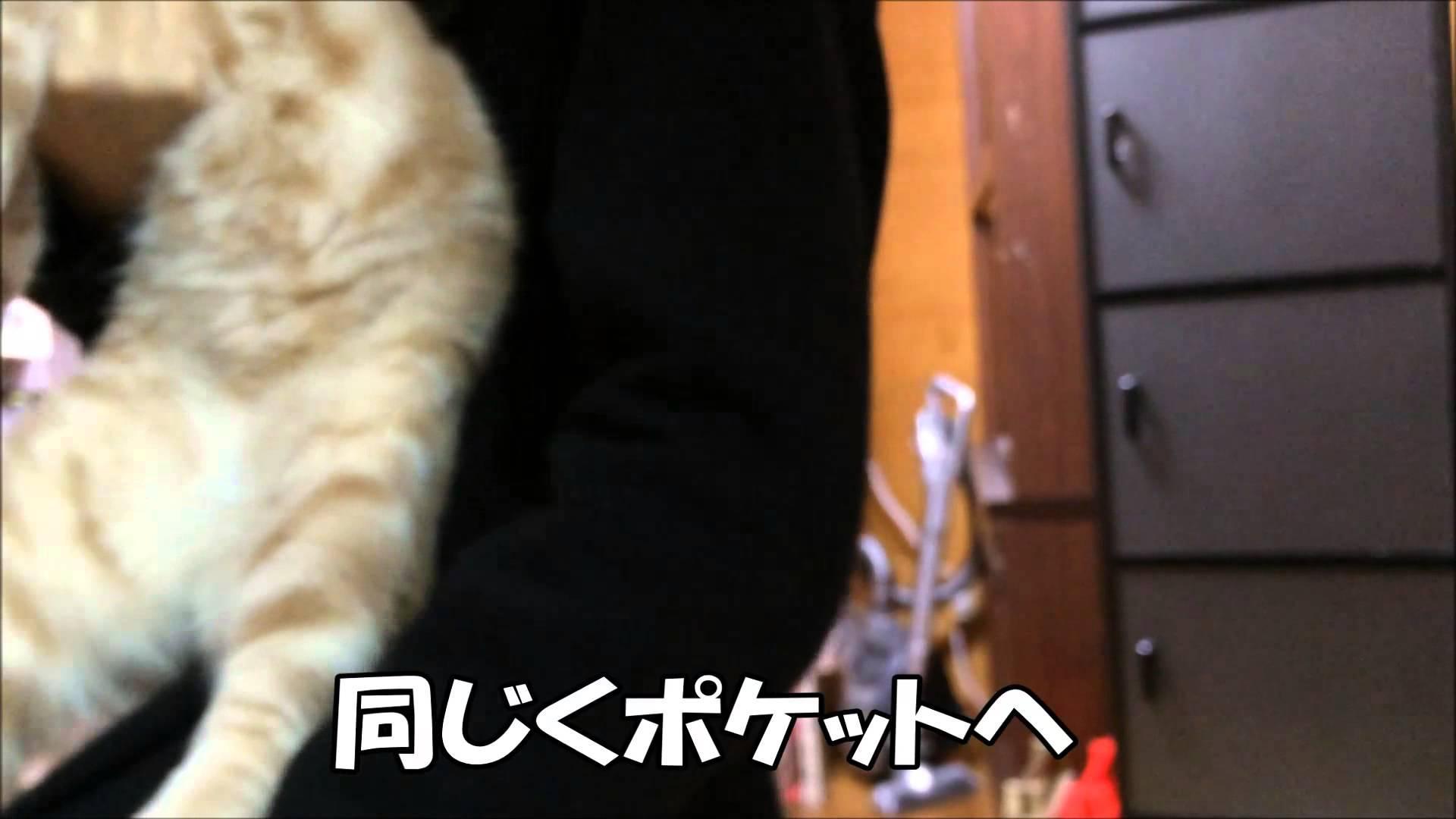 ポケットからヒョッコリ♡な猫ちゃんに悩殺!!