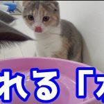 流れる水に興味津津!うっとり〜な子猫ちゃんたち♡