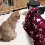 子猫の尻尾が気になりすぎる猫。