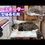 ファーミネーターですいた猫ちゃんの毛の量が大変なことに!!