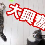猫じゃらしめがけてスーパージャンプ!な猫ちゃん♡