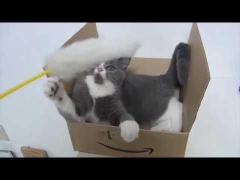 箱の中からじゃれつく猫ちゃんにキュン死に♡