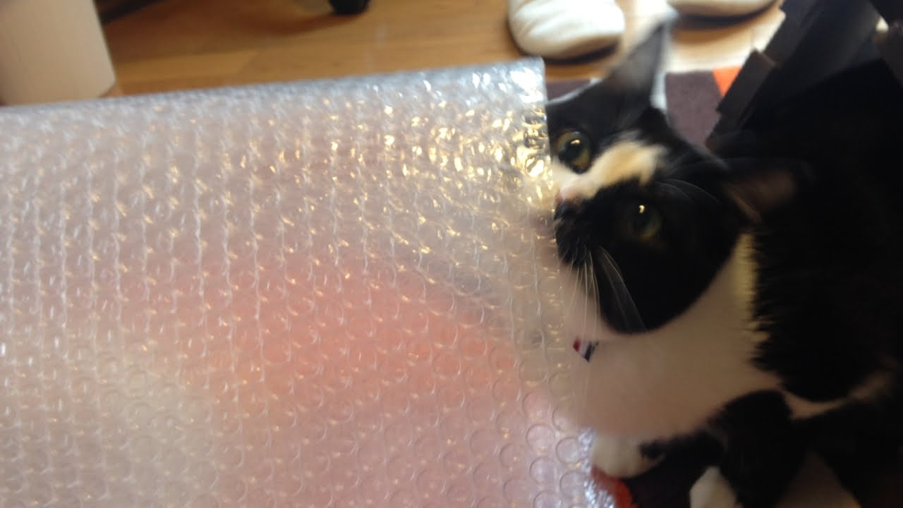 プチプチで作る猫ちゃんトンネルに夢中♡