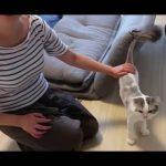 サマーカットした猫ちゃんたちと周りの猫さんの反応が面白い(^o^)