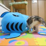 食べられちゃった!?サメのベットにすっぽりな猫ちゃんに萌え〜♡