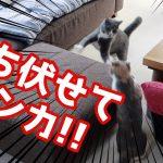 猫ちゃんたちのマイブームが可愛すぎる件♡