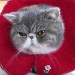 猫ちゃん用お手製エリザベスカーラーが可愛すぎる件♡
